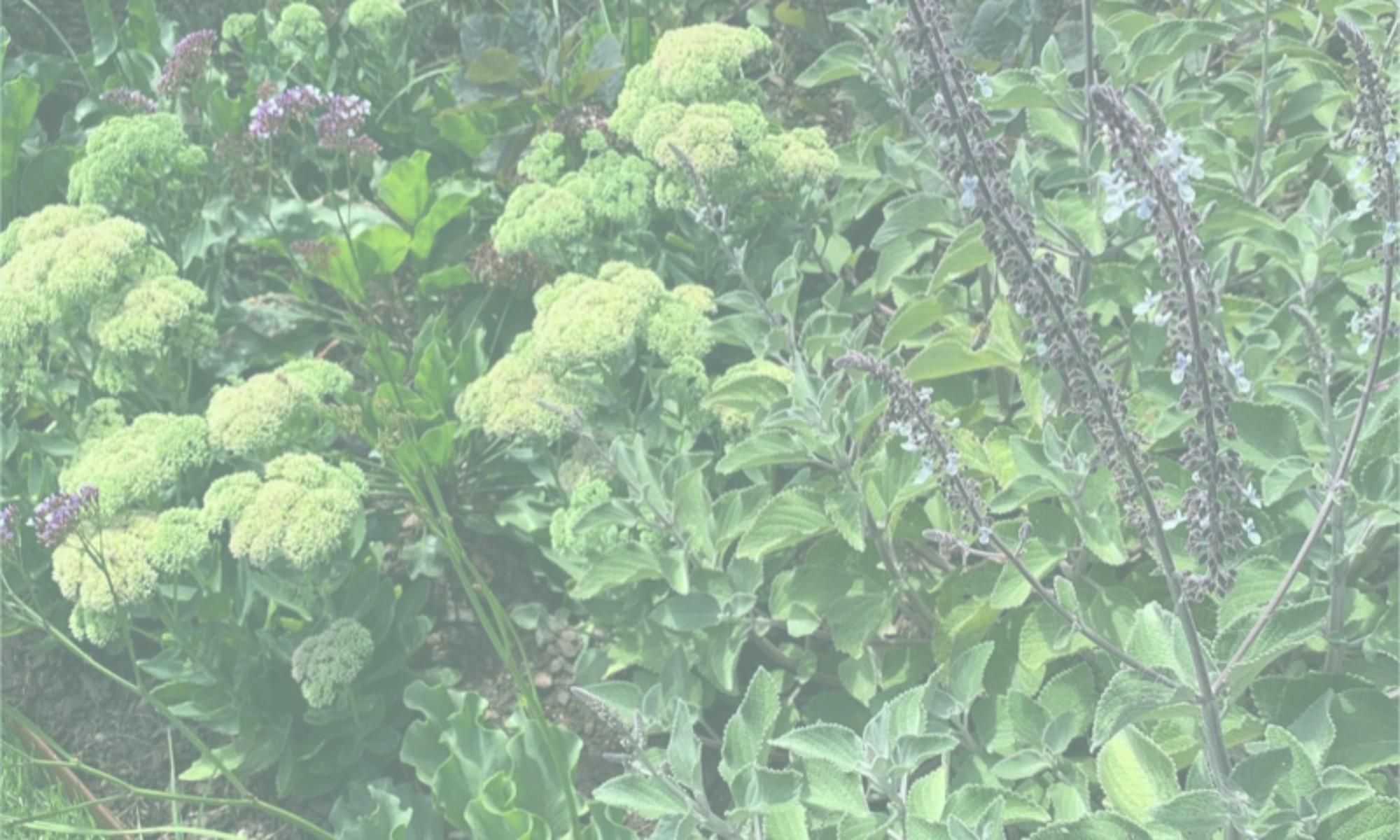 Thornbury Horticulture & Design